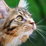 Кошка — хищник