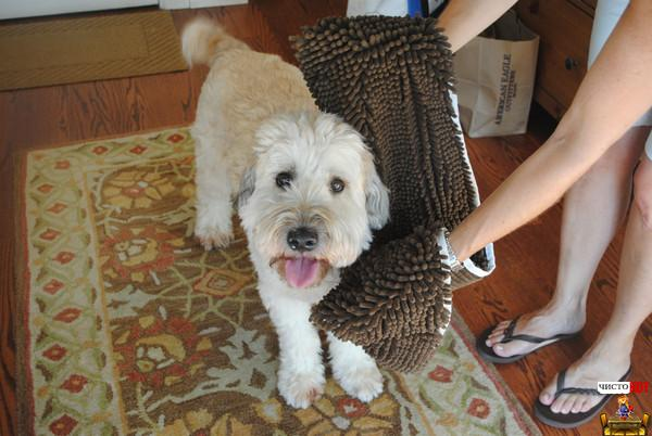 Полотенце для собак от Soggy Doggy