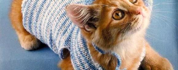 Вязаная одежда для кошек — Костюм морячки