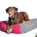 Выбираем лежаки для крупных пород собак