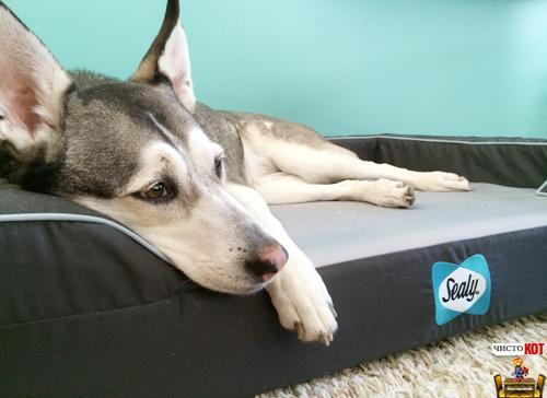 Лежак для крупных пород собак Sealy