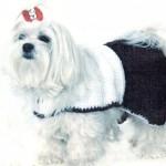Как связать для собаки одежду – Черно-белой платье