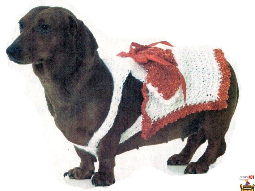 Как связать собаке платье для свидания