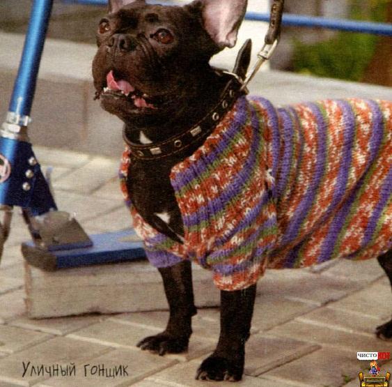 Одежда для французских бульдогов – меланжевая кофта