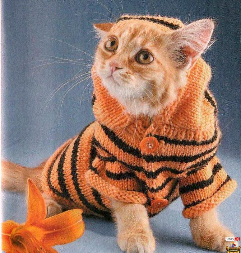 Связать костюм для кошки своими руками