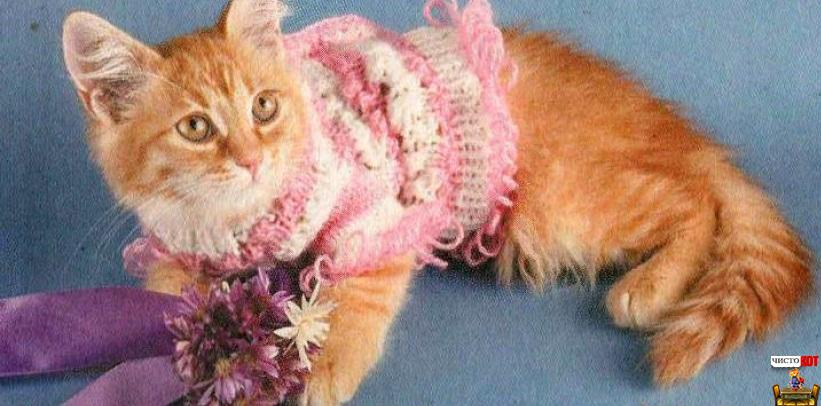 Одежда для котят – ажурная кофточка