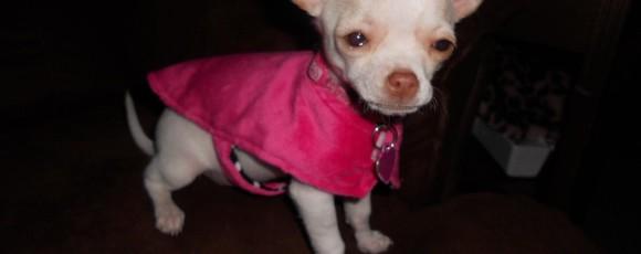 Одежда для маленьких собак — Двустороннее пальто