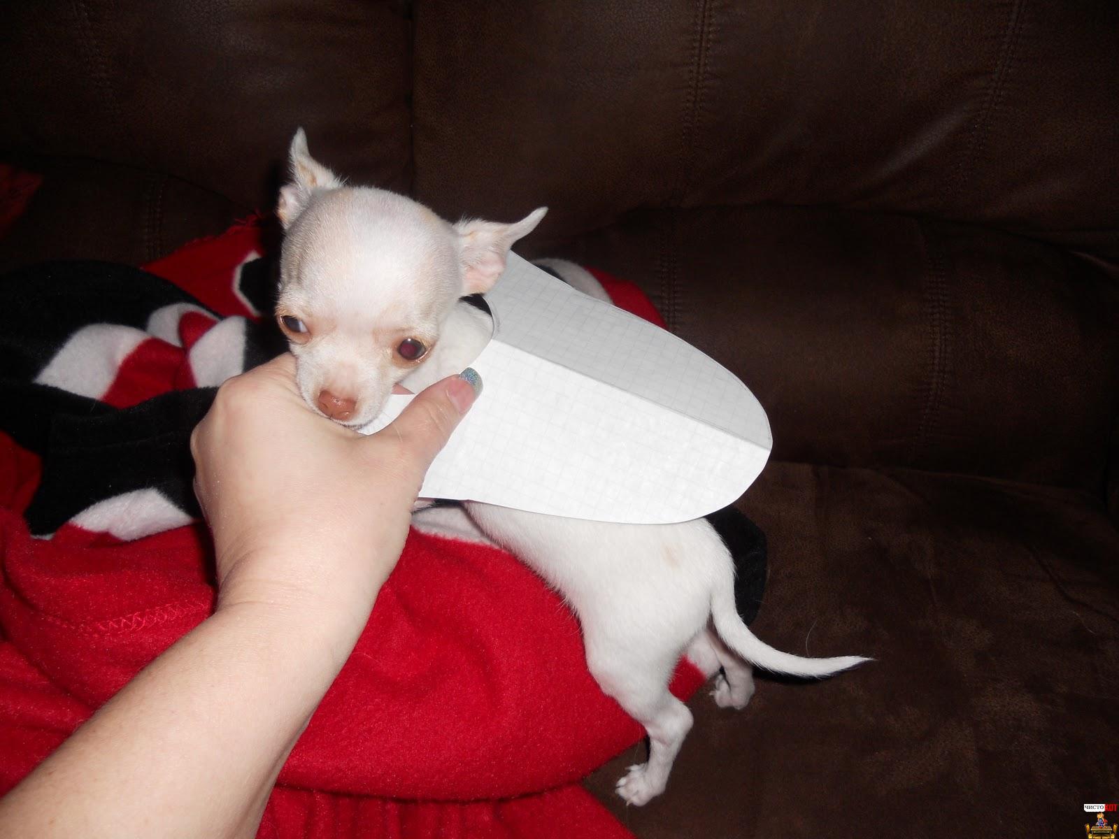Одежда для маленьких собак – двустороннее пальто