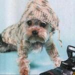 Одежда для собак мелких пород – комбинезон с капюшоном