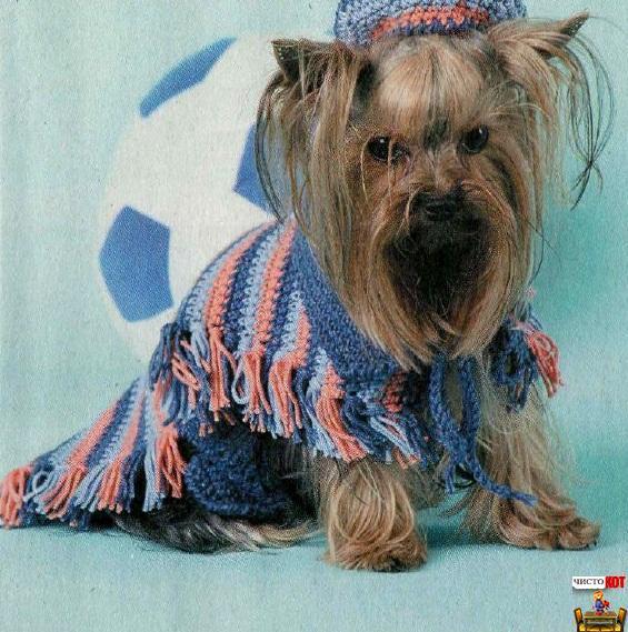 Вязаная одежда для собак и