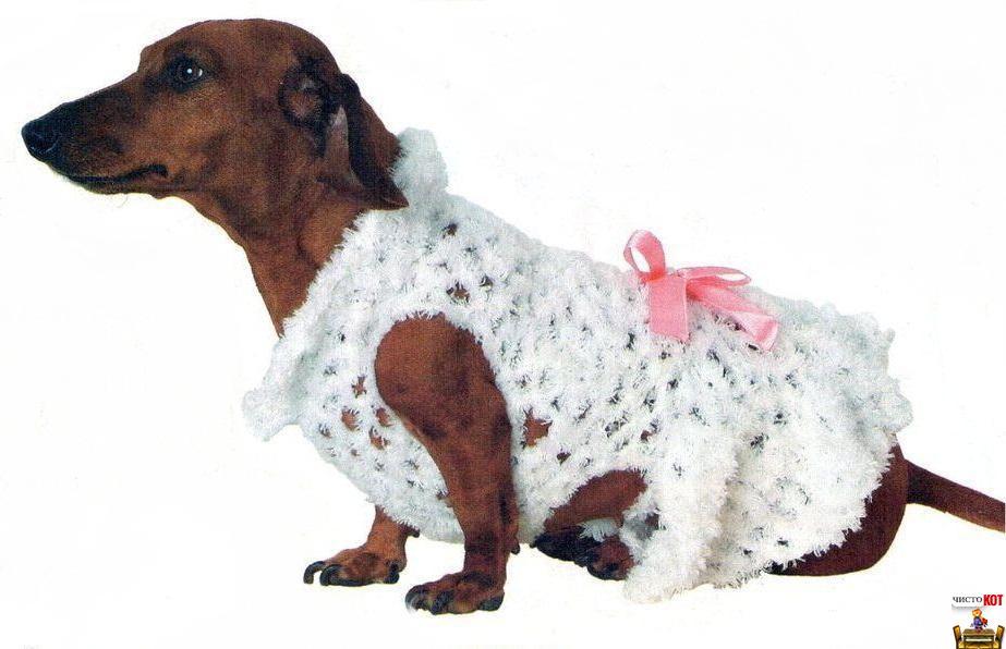 Одежда для таксы — праздничное платье