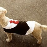 Стильная одежда для собак — смокинг своими руками