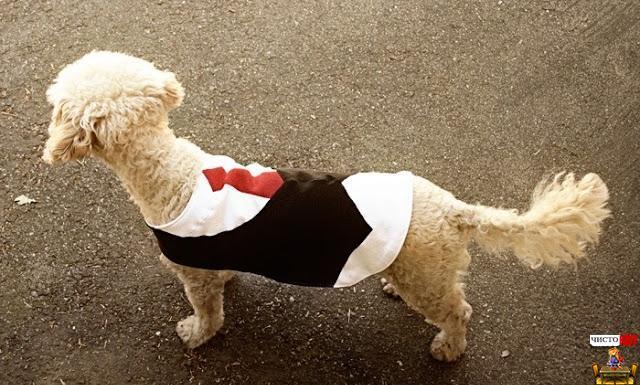 Стильная одежда для собак – смокинг своими руками
