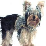 Вязаная одежда крючком для собак – Топ для маленьких собак