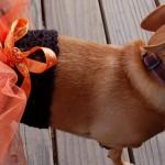 Вязание одежды для собак — Пачка для собаки