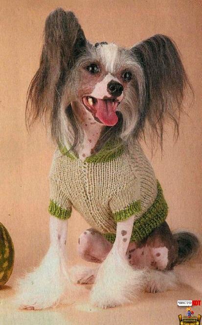 Вязанная одежда для собак – пуловер с капюшоном