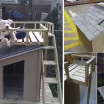 Дом для собаки с верхней площадкой своими руками