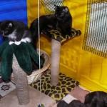 Содержание кошек в домашних условиях