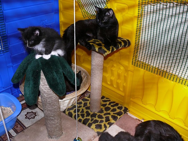 Содержание и уход за кошкой в домашних условиях 88