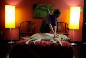 Отели для домашних животных