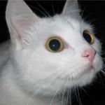 Болезни кожи у кошек