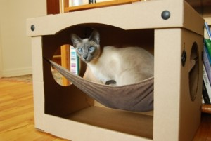 Домик для кошки, – какой он должен быть