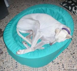 Кровать из поролона для собаки