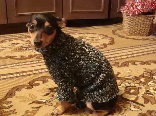 Как сделать свитер для маленькой собаки