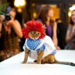 Как защитить кота от холода? + Выкройки одежды