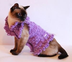 Как защитить кота от холода