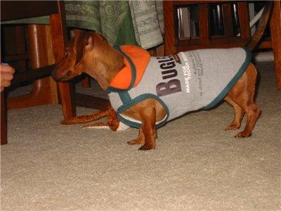 Выкройка толстовки для собаки