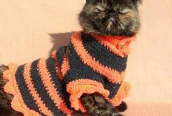 Как связать одежду для своей британской кошки. Полезные советы