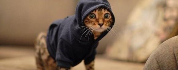 Как сделать одежду для кошки самостоятельно