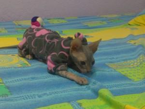 пижамы для кота