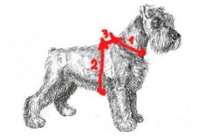 Как снять мерки для шлеи для собаки