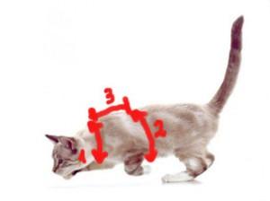 Как снять мерки для шлеи для кота