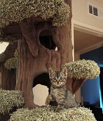 Оригинальные домики для кошки