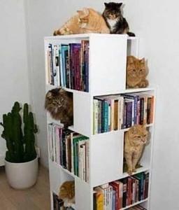 Место для котов в стеллаже для книг