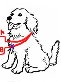 Какие мерки нужны для оберега для собаки