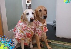 Делаем рубашку для собаки самостоятельно