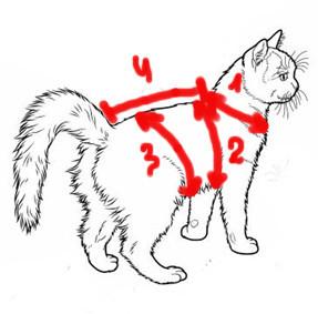 Футболки для кошек: снимаем мерки