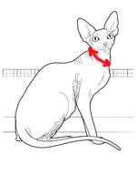 Как снять мерки для ошейника коту