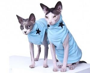 Как сшить одежду для кошки своими руками