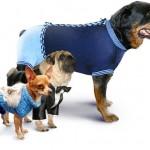 Универсальные выкройки одежды для собак