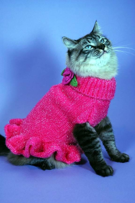 всего, подумайте фото кошек в одежде именно запах
