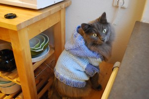 вязанная одежда для кошки