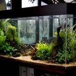 Рыбки. Как правильно ухаживать за аквариумом?