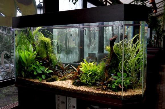 Как правильно ухаживать за аквариумом