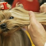 Правила стрижки собак в зависимости от породы