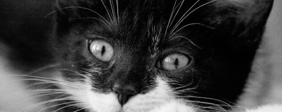 Как воспитать котенка?
